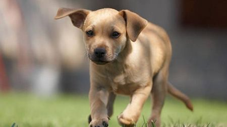 10 consejos prácticos para los nuevos propietarios de un perro
