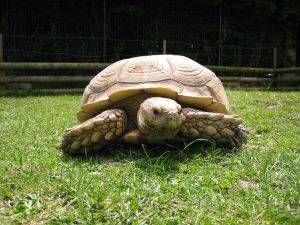 Cuidados generales de las tortugas de tierra