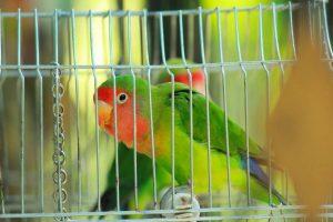 Como-preparar-una-jaula-para-aves-bien-equipada