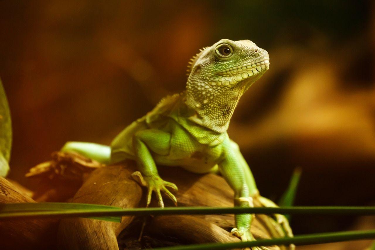 Enfermedad ósea metabólica de los reptiles