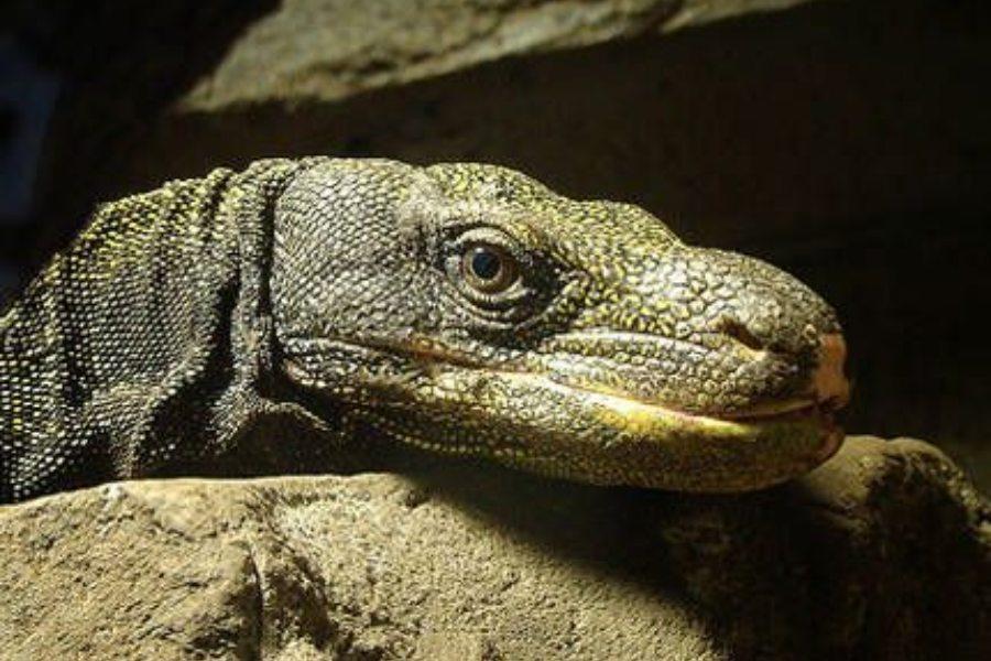 Gradiente térmico para reptiles_ cómo lograrlo