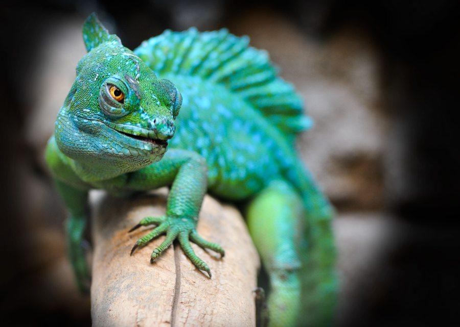 Hiper e hipoactividad en los reptiles en cautiverio