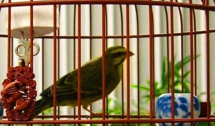 Una jaula limpia es la clave para un pájaro sano