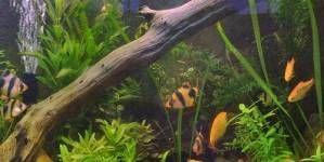 Ciclo del nitrógeno en los acuarios nuevos