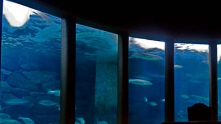 Análisis del agua en los acuarios