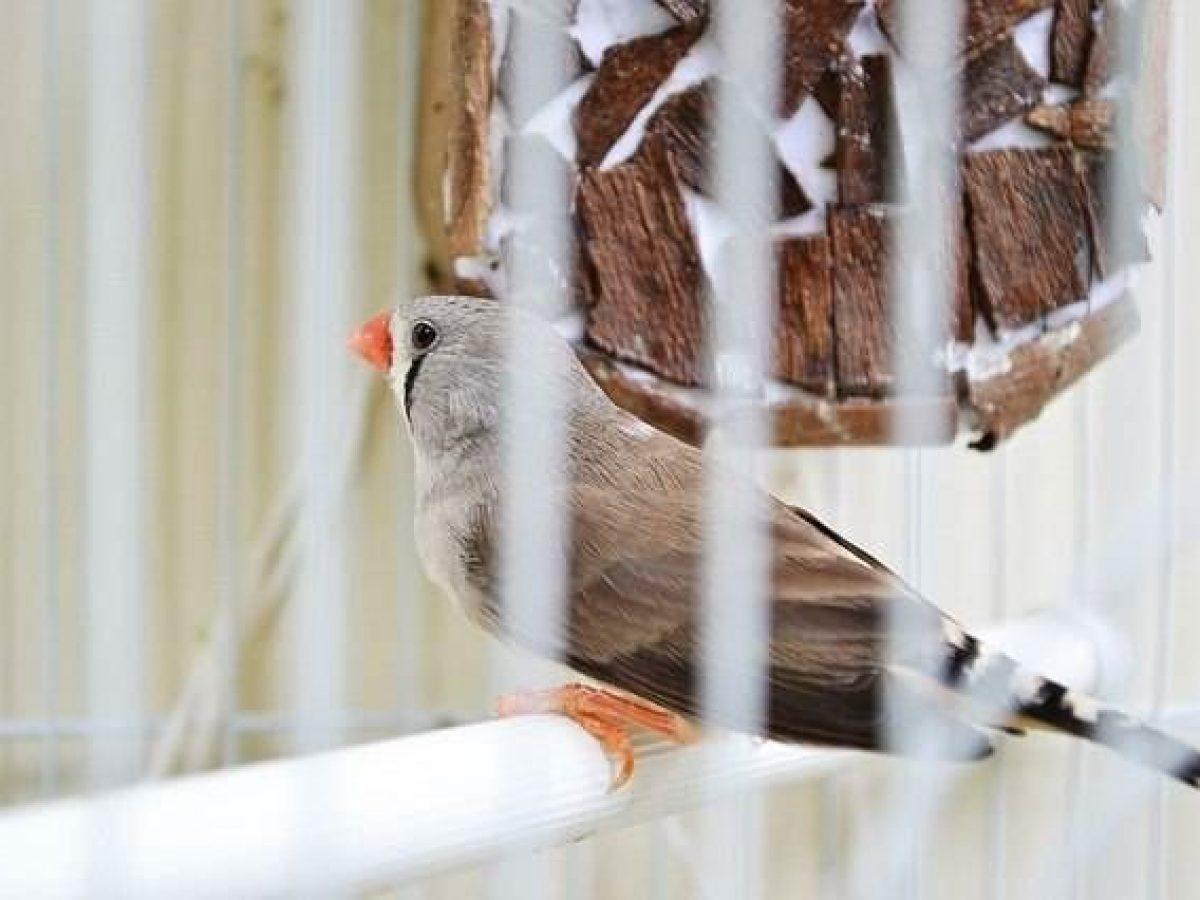 Sintomas De Enfermedad En Las Aves Domesticas Tiendanimal