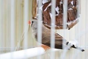 Síntoma de enfermedad de las aves