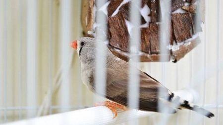 Síntomas de enfermedad en las aves domésticas