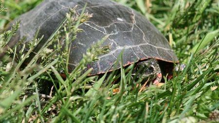 Guía para la hibernación de las tortugas