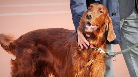 ¿Las personas con inmunodeficiencia pueden tener mascotas?