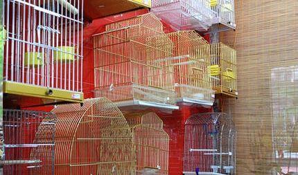 Limpieza y desinfección de jaulas y terrarios