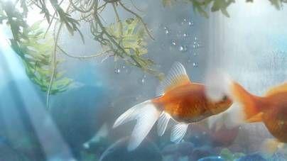 Iluminación en el acuario