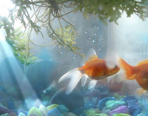 el en Iluminación Iluminación acuario en el Tiendanimal bfy76g