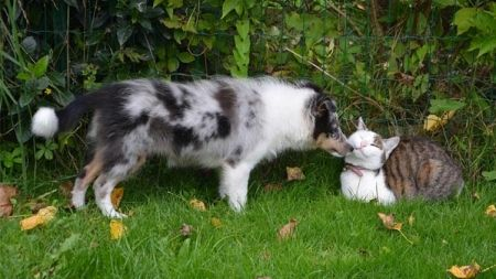 Obesidad en perros y gatos