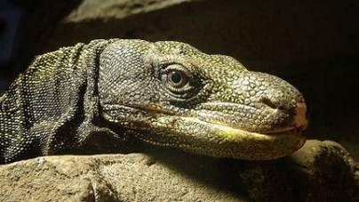 Gradiente térmico para reptiles: cómo lograrlo