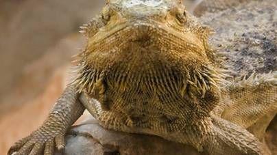 Calefacción para reptiles: ¿cuántos watts usar?
