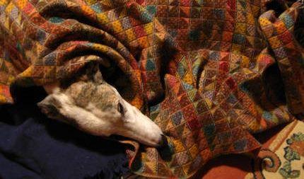 ¿Sabías qué los perros sufren las mismas alergias…? nº1