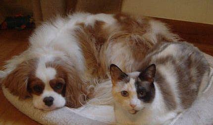 Cuidado de los oídos en perros y gatos