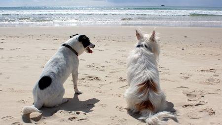 Adoptar otro perro en casa ¿Cuándo es conveniente?