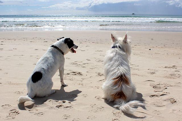 Adoptar otro perro en casa, ¿Cuándo es conveniente?
