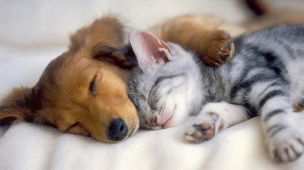 Alimentación de un perro o gato cachorro