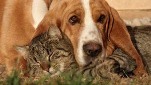 Cálculos urinarios en perros y gatos