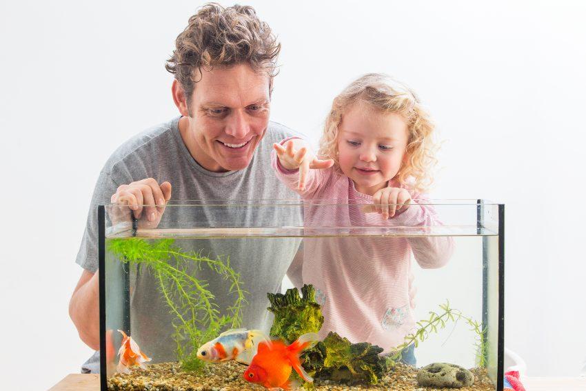 consejos-mantenimiento-acuario