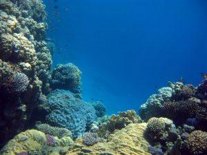 ambiente-acuatico