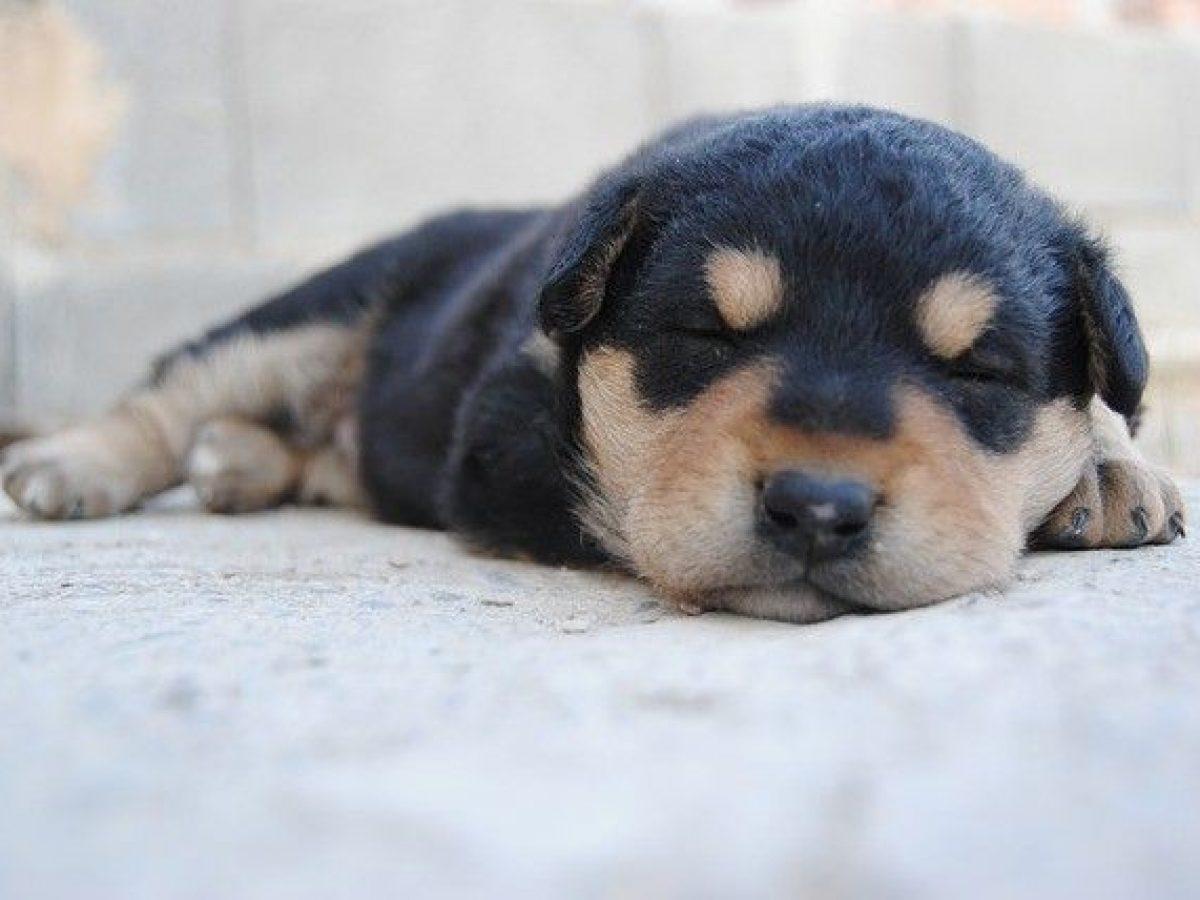Cómo Cuidar A Un Cachorro Recién Nacido Necesidades Y Alimentación