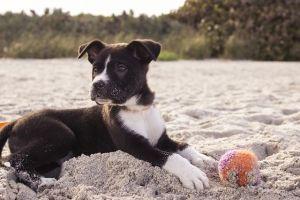 Cuidados básicos del cachorro