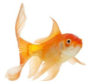 cuidados-del-pez