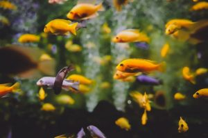 decoracion-acuario
