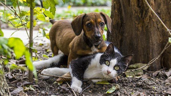 Educación y comportamiento de un Perro o Gato cachorro