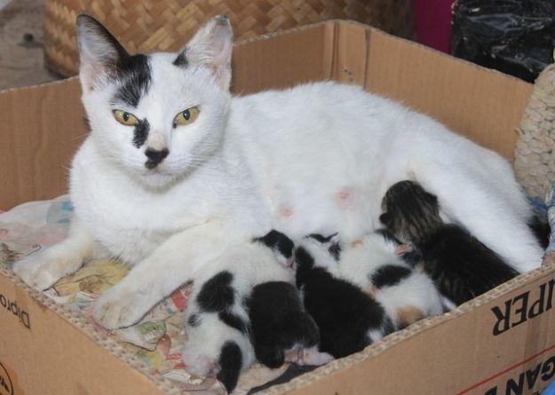 El parto de la gata