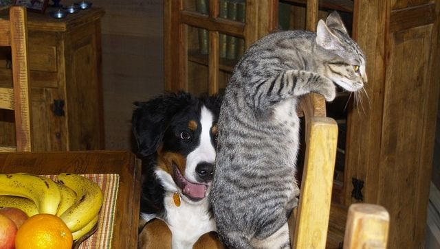 Juegos didácticos para mascotas