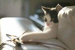 Cómo jugar con tu gato