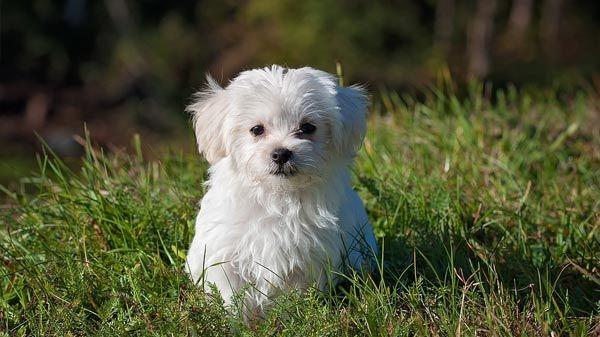La forma de ser de tu perro cachorro tiendanimal - Es malo banar mucho a los perros ...
