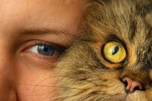Personas con alergia a las mascotas