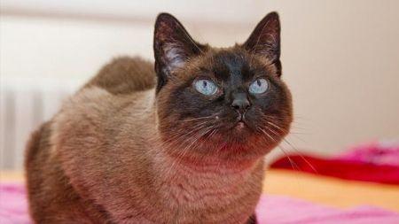 Salud y Prevención de Enfermedades en Gatos