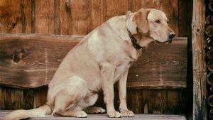 Salud y Prevención de Enfermedades en Perros