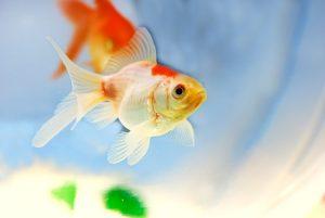 que-hacer-enfermedades-peces