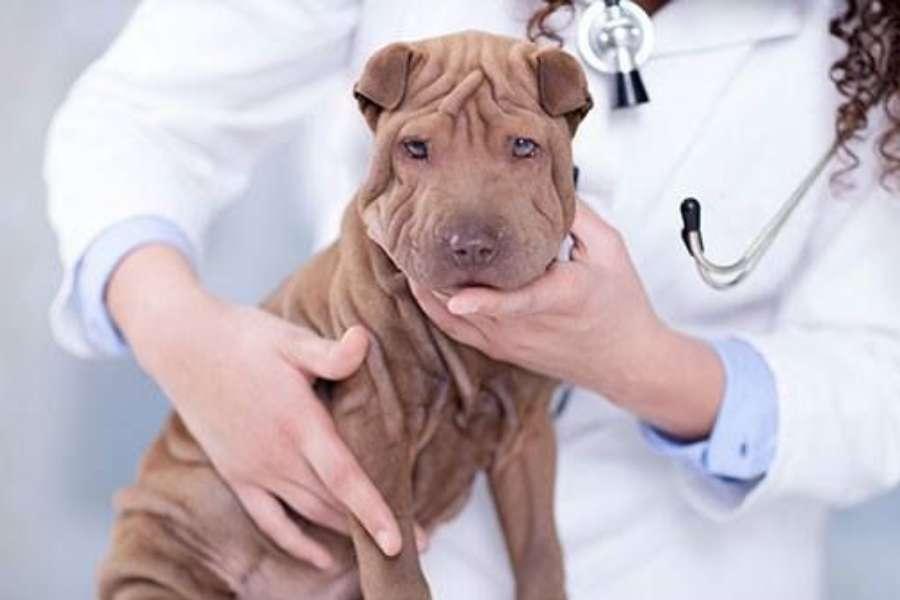 vacuna giardia perros efectos secundari parasitos oxiuros tratamiento