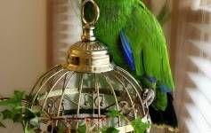 Cosas que debes saber antes de adoptar un ave