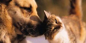 Parásitos intestinales en perros y gatos