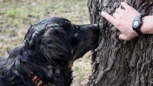 Perros que colaboran en la conservación de nuestro ecosistema