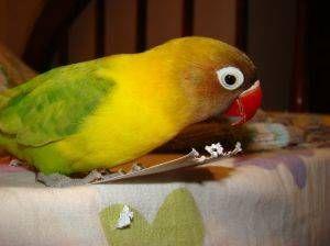 Síntomas de problemas digestivos en las aves