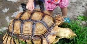 Salmonella: ¿los reptiles son peligrosos para los niños?