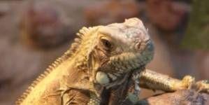 Hipotermia en los reptiles: ¿qué hacer?
