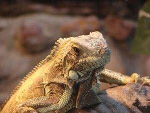 Suplementos de vitaminas y minerales para reptiles