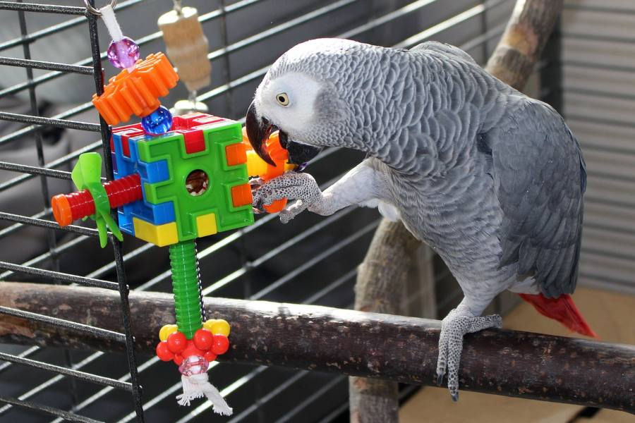 como-escoger-la-jaula-correcta-para-cada-ave
